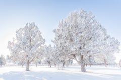 Schneebäume stockbilder