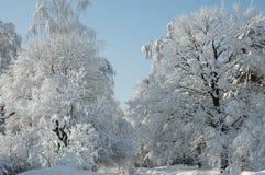 Schneebäume auf Sonnenschein Stockfotos