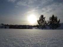 Schneebäume, die Sonnenwinter glätten Stockfotografie