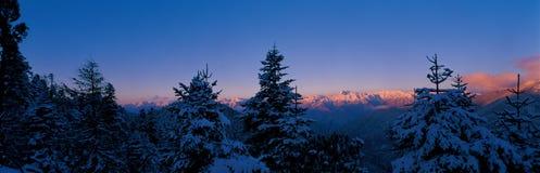 Schneebaum im Sonnenaufgang Lizenzfreies Stockbild