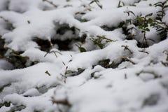 Schneebaum von Paris am Winter stockbild