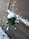 schneebedeckt Lizenzfreies Stockfoto