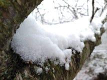 schneebedeckt Stockfotografie