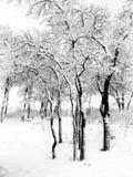 Schneebedeckte Bäume Stockfotos