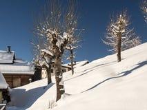 Schneebedeckte Bäume auf einem Hügel Lizenzfreies Stockfoto