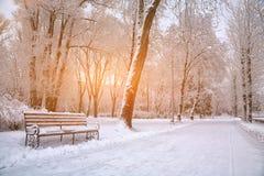 Schneebedeckte Bäume im Stadtpark Stockbilder