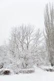 Schneebedeckte Bäume im Winterpark Stockfotos