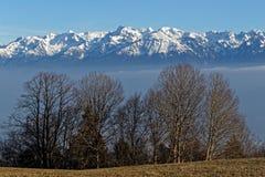 Schneebedeckte Berge Belledonne hinter einigen Bäumen stockfoto