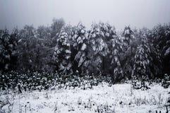 Schneebedeckte dunkle Stimmungsbäume stockfotos