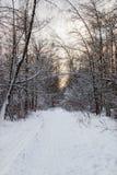 Schneebedeckte Gasse im Wald mit Sonnenunterganghimmel Lizenzfreie Stockfotos