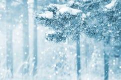 Schneebedeckte Kieferniederlassungen lizenzfreies stockbild