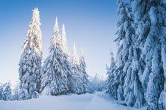Schneebedeckte Landschaft des schönen Winters, Wald stockbild