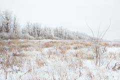 Schneebedeckte Landschaft des Winters Stockbilder