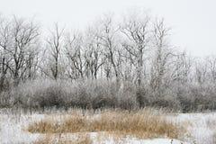 Schneebedeckte Landschaft des Winters Stockfotos