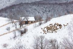 Schneebedeckte Landschaft des Winters des transylvanian Dorfs Stockfoto