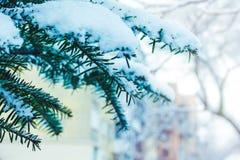 Schneebedeckte Niederlassung der Tanne auf einem unscharfen Hintergrund, ein freies s stockfoto
