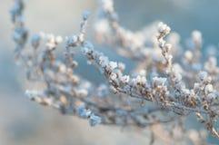 Schneebedeckte Niederlassungen des Winters Lizenzfreie Stockbilder