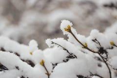 Schneebedeckte Niederlassungen im Vorfrühling gegen den Himmel Lizenzfreies Stockbild
