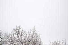 Schneebedeckte Niederlassungen im Vorfrühling gegen den Himmel Stockbild