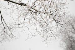Schneebedeckte Niederlassungen im Vorfrühling gegen den Himmel Stockfoto