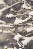 Schneebedeckte Niederlassungen im Vorfrühling gegen den Himmel Lizenzfreies Stockfoto