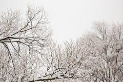 Schneebedeckte Niederlassungen im Vorfrühling gegen den Himmel Stockfotografie