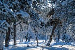 Schneebedeckte Niederlassungen im Winterpark lizenzfreie stockbilder