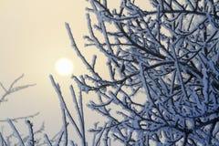 Schneebedeckte Niederlassungen und die Sonne im Nebel Stockfoto