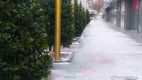 Schneebedeckte schöne Gasse mit grünen Bäumen und Geschäften in der Stadt stock video