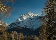 Schneebedeckte Spitze hinter Bäumen Lizenzfreie Stockbilder