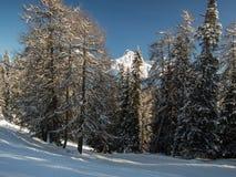 Schneebedeckte Spitze hinter Bäumen Lizenzfreies Stockbild