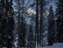 Schneebedeckte Spitzen hinter Bäumen Stockbilder