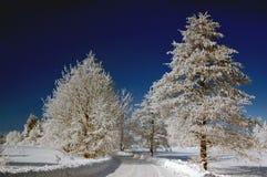 Schneebedeckte Straße und Bäume Lizenzfreie Stockfotografie
