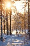Schneebedeckte Szene des Wintermorgens stockfotos