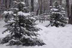 Schneebedeckte Tanne im Park im Winter Stockbild
