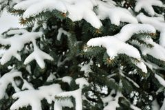 schneebedeckte Tannenbaumaste Lizenzfreies Stockfoto