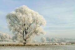 schneebedeckte Winterlandschaft mit bereiftem Baum Lizenzfreies Stockbild