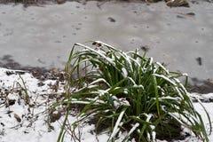 Schneebedeckter Büschel des Grases und des kleinen Stromes im Eis im Stadtpark am nebeligen Morgen stockbild