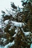 schneebedeckter Baum Stockfotografie