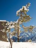 schneebedeckter Baum Lizenzfreies Stockfoto
