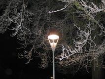 schneebedeckter Baum Stockbild