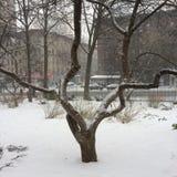 schneebedeckter Baum Stockfoto