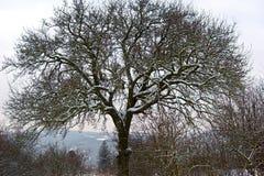 schneebedeckter Baum Lizenzfreies Stockbild