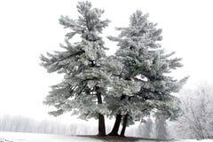 schneebedeckter Baum Lizenzfreie Stockbilder