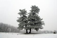 schneebedeckter Baum Stockfotos