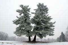 schneebedeckter Baum Lizenzfreie Stockfotografie