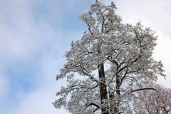 Schneebedeckter Baum am November-Tag Lizenzfreies Stockbild