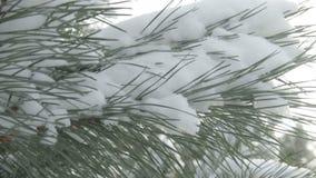 Schneebedeckter Baumast bei Sonnenuntergang stock footage