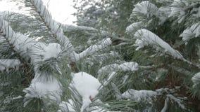 Schneebedeckter Baumast bei Sonnenuntergang stock video