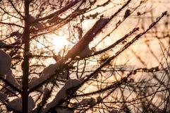 Schneebedeckter Baumast bei Sonnenuntergang lizenzfreie stockbilder